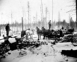 P. Kelly's camp C.N.P. Lbr. [Crow's Nest Pass Lumber] Co. [men skidding logs with horse...