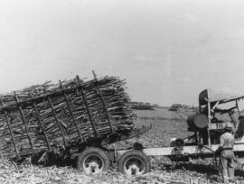 Cane cars etc., pressed steel, loaded sugarcane car in field