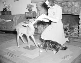 [A fawn and a cat being fed inside Forbidden Plateau Lodge]