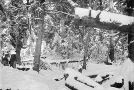 [Man aiming his gun at deer in snow covered forest]
