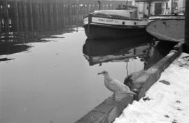 [Seagull on dock near fishing boats]