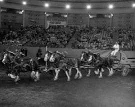 Six-horse team pulling wagon in Agrodome