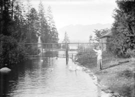 [Woman feeding swans in Stanley Park]