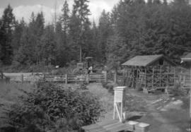 "[View of  the woodshed and yard at ""Havencot""]"