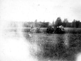 The binder at work in West meadow [S.H. Luck Farm, Pouce Coupe, B.C.]