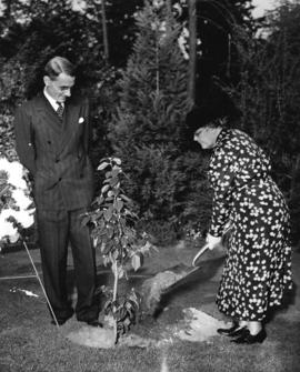 "[Mrs. James Esselmont plants a ""Frances Willard"" tree in the rock garden in Stanley Park]"