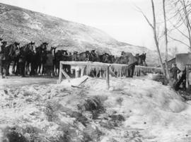 [Soldiers and horses line up at frozen watering point on the Western Front]