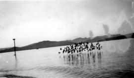 A flock of birds flying low over the water