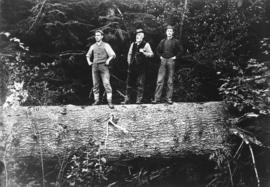 [Thomas Keeling, Thomas John Keeling and Frederick Keeling standing on a log]