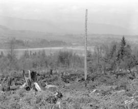 [View of the east end of Burnaby Lake showing outlet to the Brunette River]