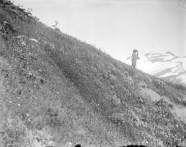 [View of mountain from the side of Panorama Ridge in Garibaldi District]