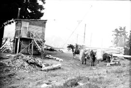 "Packer ""Joan"" arriving at camp with two horses loaded with hay  [at] Garibaldi Hostel"