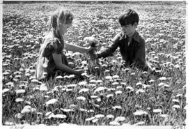 Renai Newman and Shawn Bence sit in field of dandelions behind East Delta Elementary