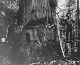 [Logging crew posing with large tree]