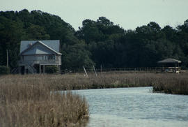 Habitat : L[itch]field Beach S[outh] Carolina Salt Marsh