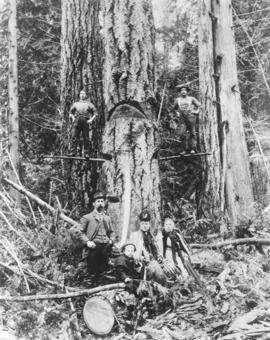 [Felling a tree using spring boards at Shawnigan Lake]