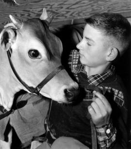 Boy with Jersey cow