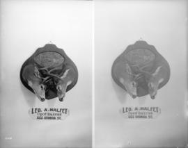 Heads of reindeer [Leo A. Malfet, Taxidermist, 555 Georgia]