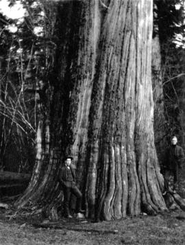 [Unidentified men beside huge tree]