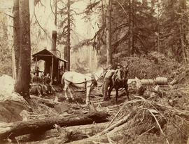 [Logging crew with horses]