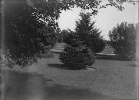 [Botanical Garden at U.B.C.]