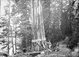 [Man standing next to large tree near trail]
