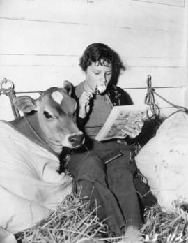 Girl reading comic book in pen with Jersey calf