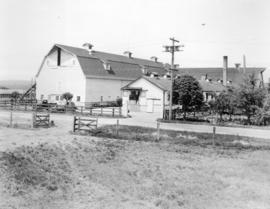 Panorama of Dairy - Barns - Buildings