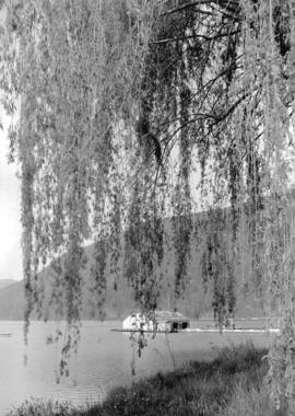 Harrison Hot springs - boat house and willow [tree]