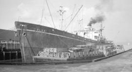 S.S. Olga [at dock, with lumber-filled barges alongside]
