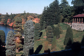 Landscape - detail : topiary