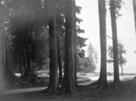 [View of path through the trees to the seawall]