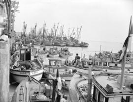 Salmon fleet at Steveston [showing] gillnetters in foreground and seiners in background