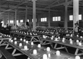 Interior of Forestry and Indian building, Building E, used as mess hall during Japanese Canadian ...
