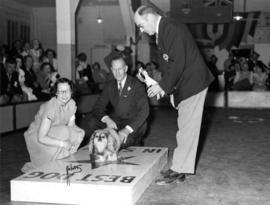 V.E.A. director presenting trophy at Exhibition dog show [Pekinese?]