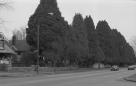 16th Avenue boulevard trees
