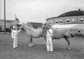 Canadian Pacific Exhibition [horses on display]