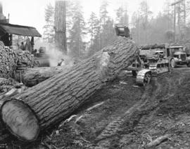 [Logging with Caterpillar tractor near Elk River]