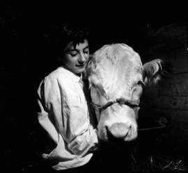 Boy with Hereford cattle