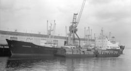 M.S. Seahorse [at dock, with lumber-filled barges alongside]