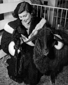 Lady in fur coat posing in barn with ewe and black lamb