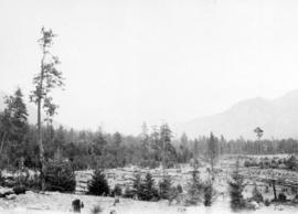 The sawmill on road from Bootahnie to Lytton