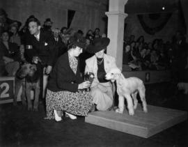 Trophy presentation at exhibition all-breed dog show [Bedlington and Airdale Terriers]