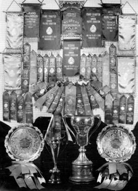 A Picture of a Few of the Many Hundreds of Banners, Ribbons and Trophies Won by the Famous Grauer...