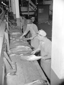 [Workers cleaning salmon]