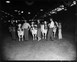 P.N.E. Vice-President J.C. Berry with award-winning Ayrshire cattle and owners in 1957 P.N.E. Liv...