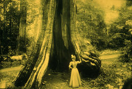 Young lady in [hollow] tree