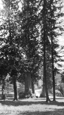 [Trees and path in Stanley Park]