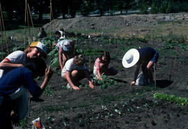 Education : children's vegetable garden