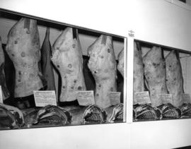 Beef competition entries hanging in display